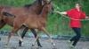 fohlen-sir-max-sportpferdezucht-girbl-2012-10