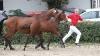 fohlen-sir-max-sportpferdezucht-girbl-2012-7