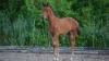 fohlen-sir-max-sportpferdezucht-girbl-2012-8