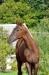 Fame in red-brown Sportpferdezucht Girbl