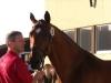 manfred-girbl-stutbuchaufnahme-carogna-bei-glock-horse-performance-center-23